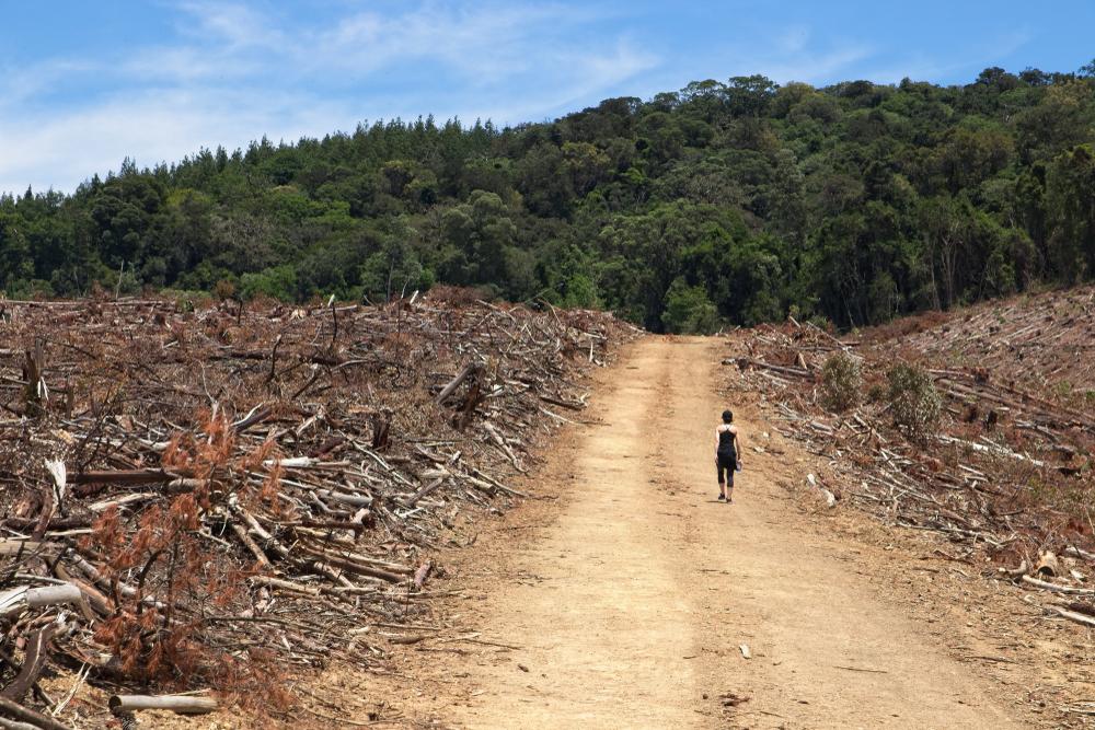 Lutte contre la déforestation : « Optimiser la consommation pour préserver notre couvert forestier »